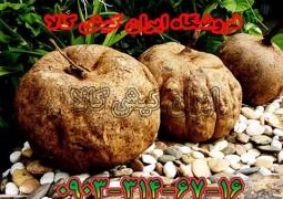 قیمت مکمل غذایی مولتی پوراریا میریفیکا